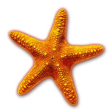 Free clipart starfish images graphic library Free Starfish Cliparts, Download Free Clip Art, Free Clip Art on ... graphic library