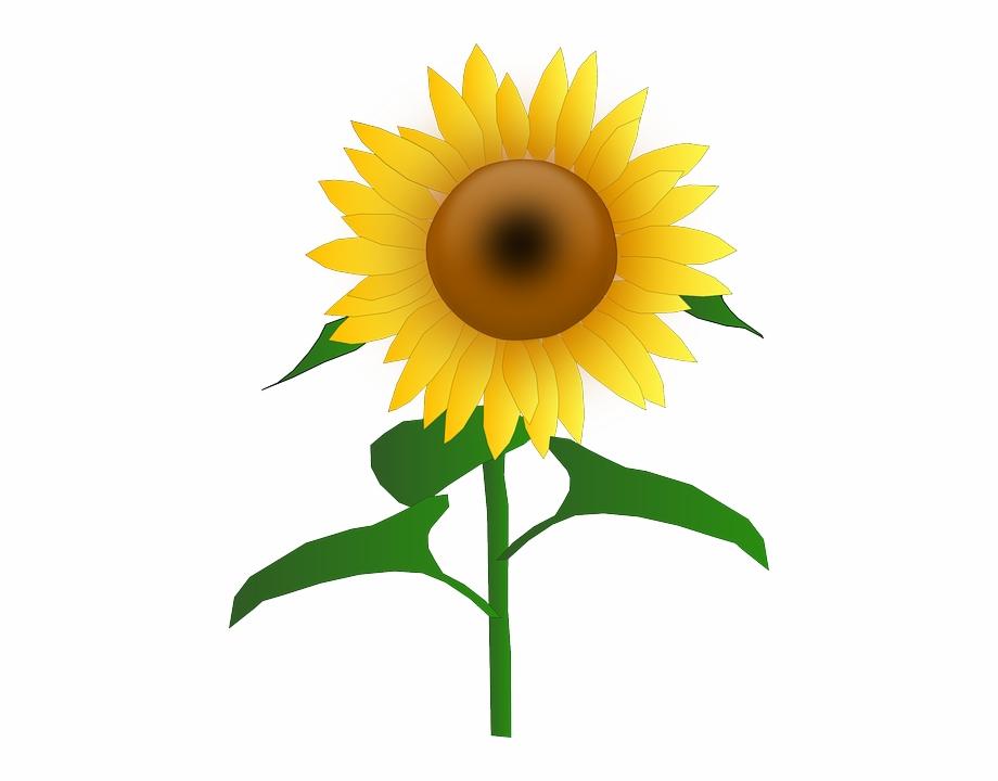 Free clipart sunflowers flowers clip freeuse Sun, Flower, Cartoon, Border, Bloom, Plant, Sunflower - Clip Art Of ... clip freeuse