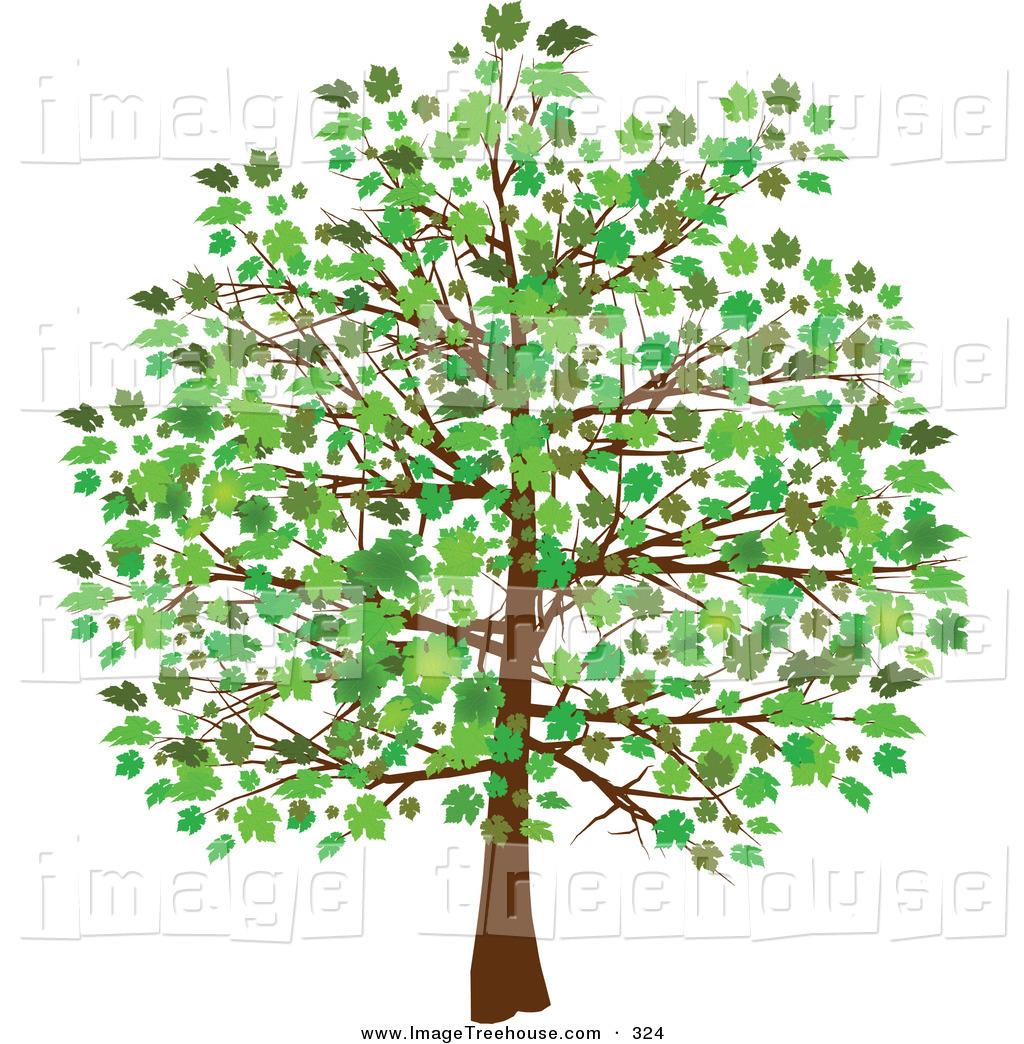 Free clipart trees images jpg stock Free Tree Images Free, Download Free Clip Art, Free Clip Art on ... jpg stock