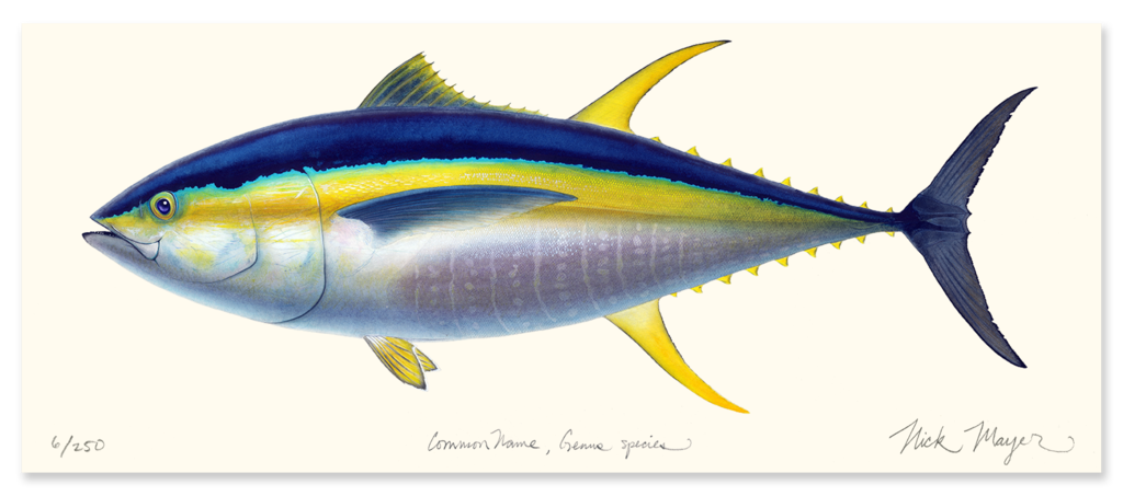 Tuna fish clipart clip freeuse Yellowfin Tuna Drawing at GetDrawings.com | Free for personal use ... clip freeuse