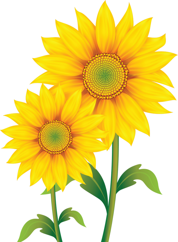 Pumpkin and sunflower clipart free image freeuse download fleurs,flores,flowers,bloemen,png | CLIP ART FLOWERS TWO | Pinterest ... image freeuse download