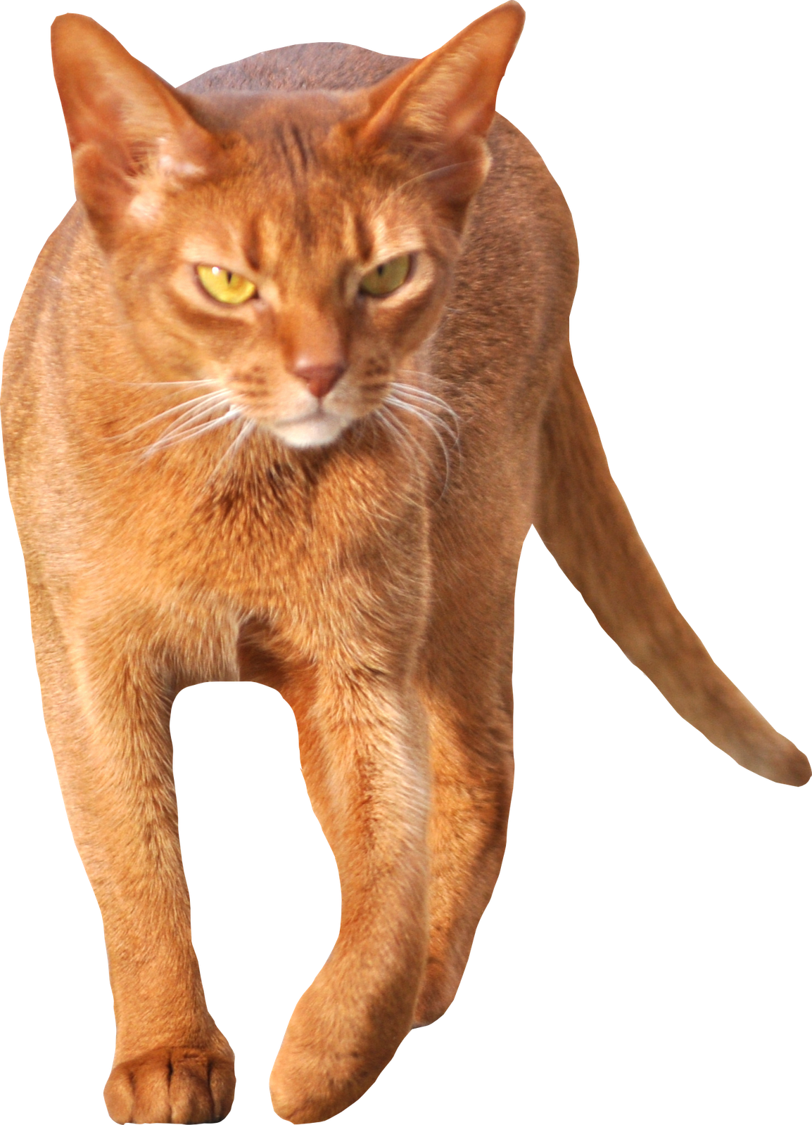 Walking cat clipart clipart free library Free Cat Images: free scrap walking cat png -walking red cat cut out ... clipart free library