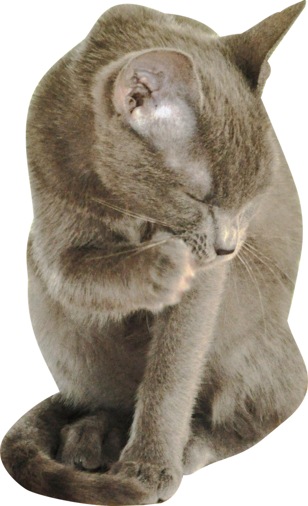 Free cut out clipart cat freeuse Free Cat Images: Free digital cat cut out png - grooming cat - freebie freeuse