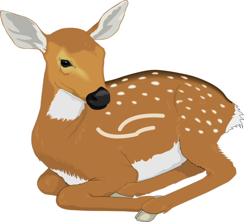 Free deer clipart images. Pictures download clip art