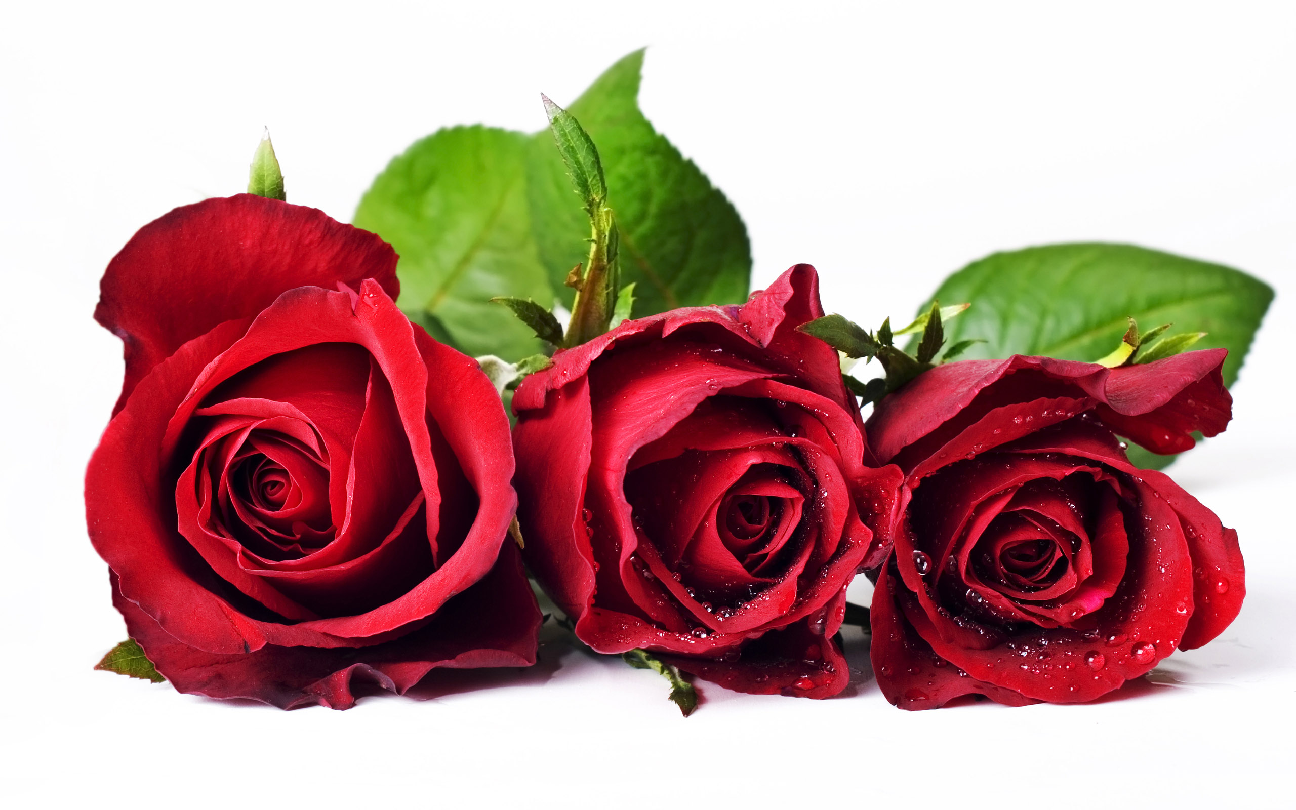 Free download flower pictures image free download Hd Flower Pictures Free Photos For Free Download image free download