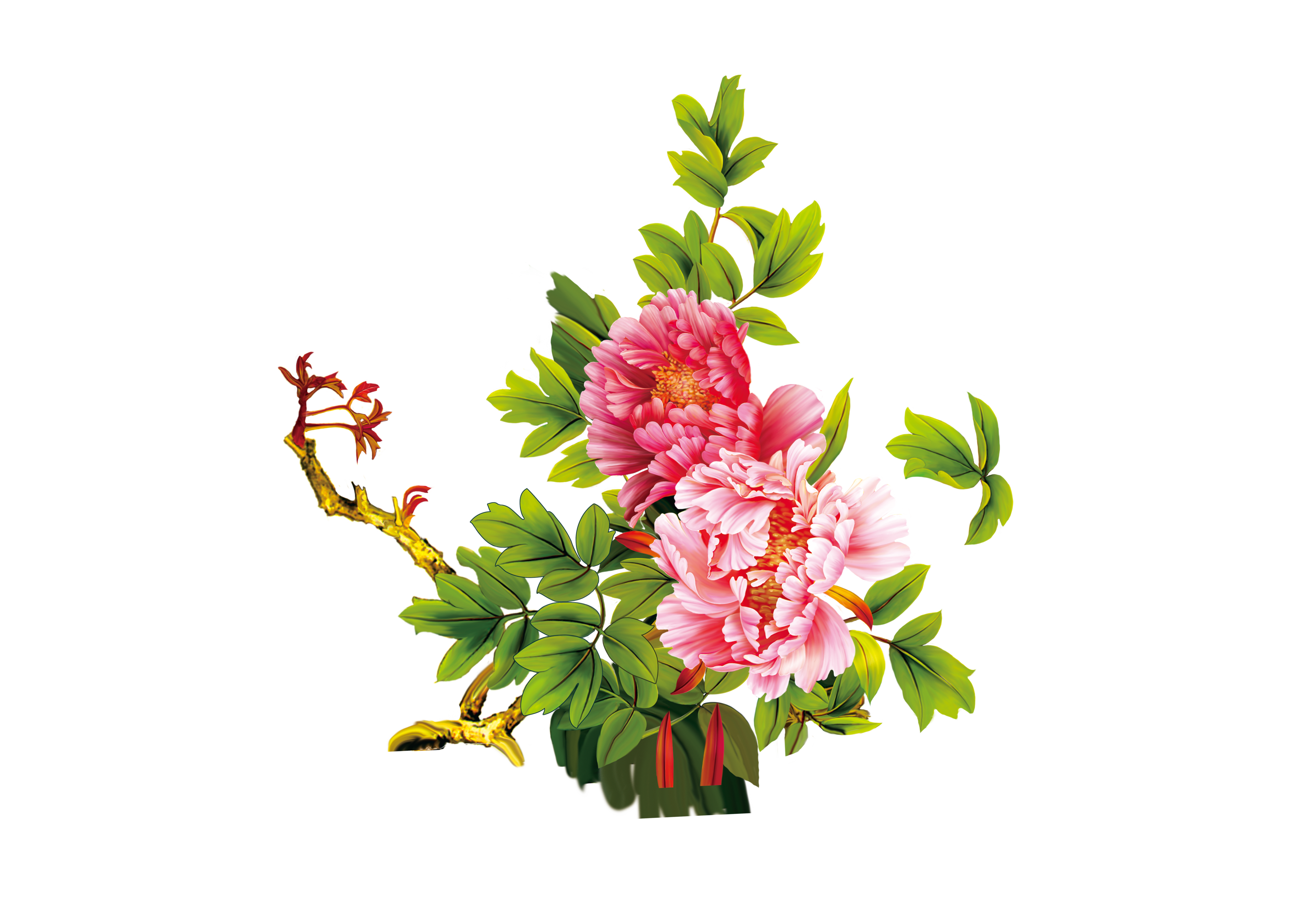 Free download images of flowers png stock Floral design Moutan peony Download Flower - Peony 3702*2601 ... png stock
