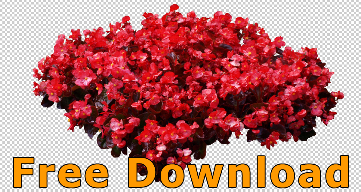 Free download flowers images clip art stock Flower Cutouts (.PNG)- Free Download » tonytextures.com clip art stock