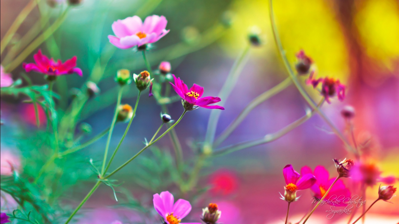 Free download of flower pictures graphic library download Amazing Flowers Wallpapers in jpg format for free download graphic library download
