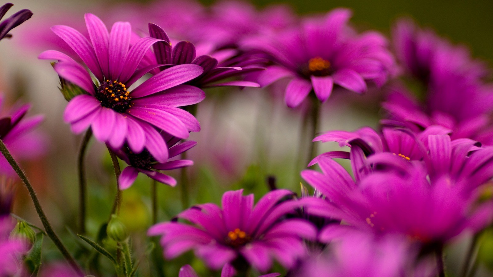 Free download of images of flowers picture freeuse World's Top 100 Beautiful Flowers Images Wallpaper Photos Free ... picture freeuse
