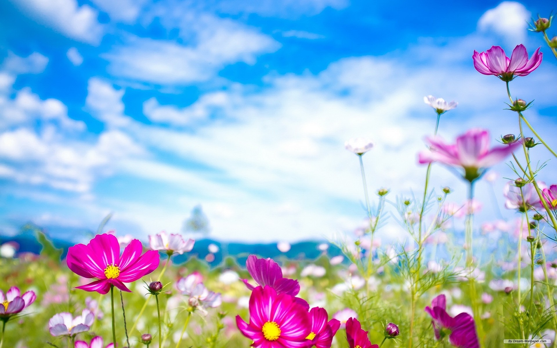 Free download pictures of spring image library stock Awesome Pics | Spring Flowers HD Widescreen Wallpapers (43+) image library stock