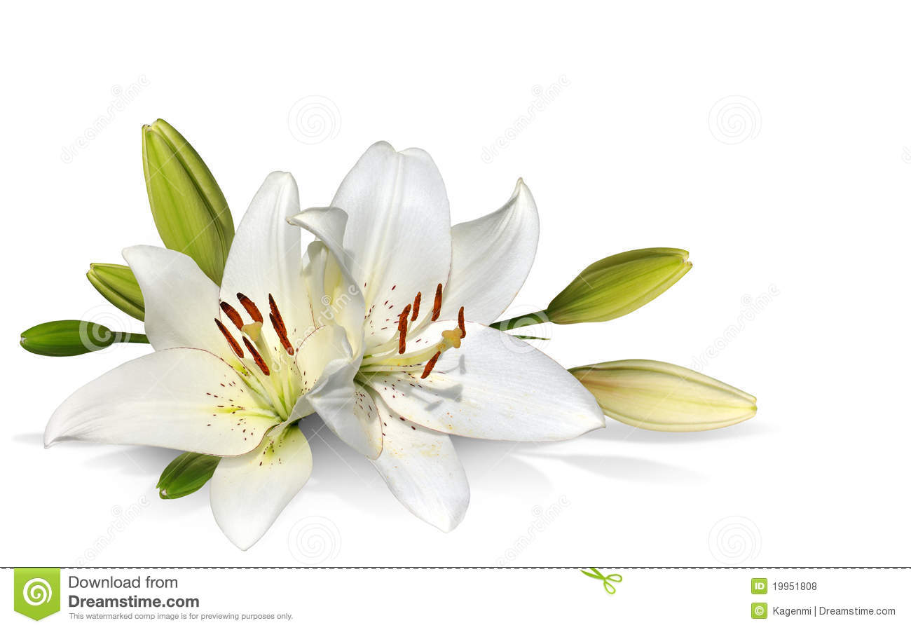 Free easter lily clipart clip stock Free clipart easter lily 3 » Clipart Station clip stock