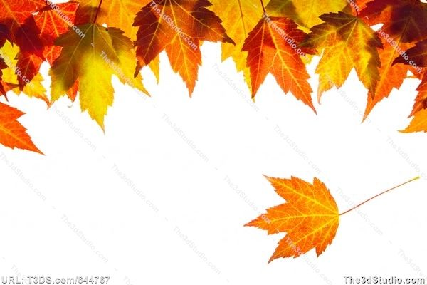 Free fall leaves clipart border clip art royalty free Microsoft Free fall Clip Art Downloads | Hanging Fall Maple Leaves ... clip art royalty free