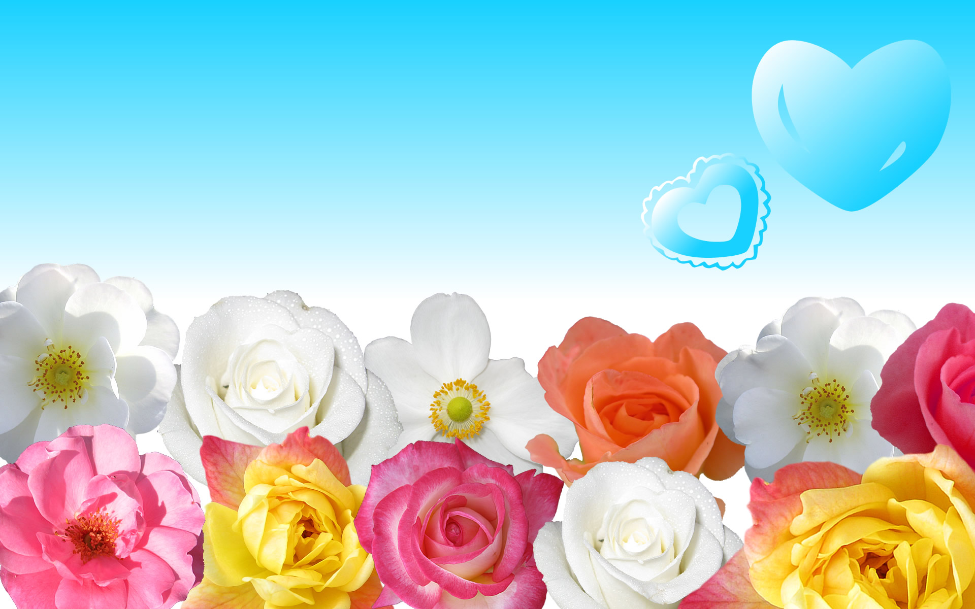 Free floral images download picture free download Download Free Flower Wallpapers picture free download