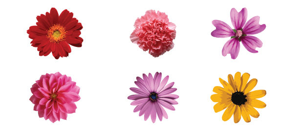 Free flower artwork image library library Vector Flowers, Free Vector Flower Art, Flowers Stock Photos ... image library library
