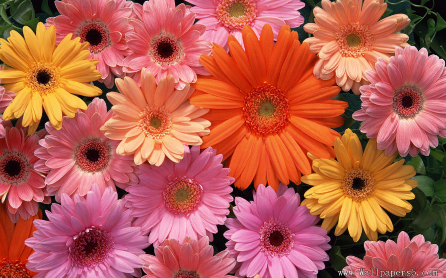 Free flower image download banner free download Backgrounds Flowers On Best Flower Wallpaper Download Free Hd ... banner free download