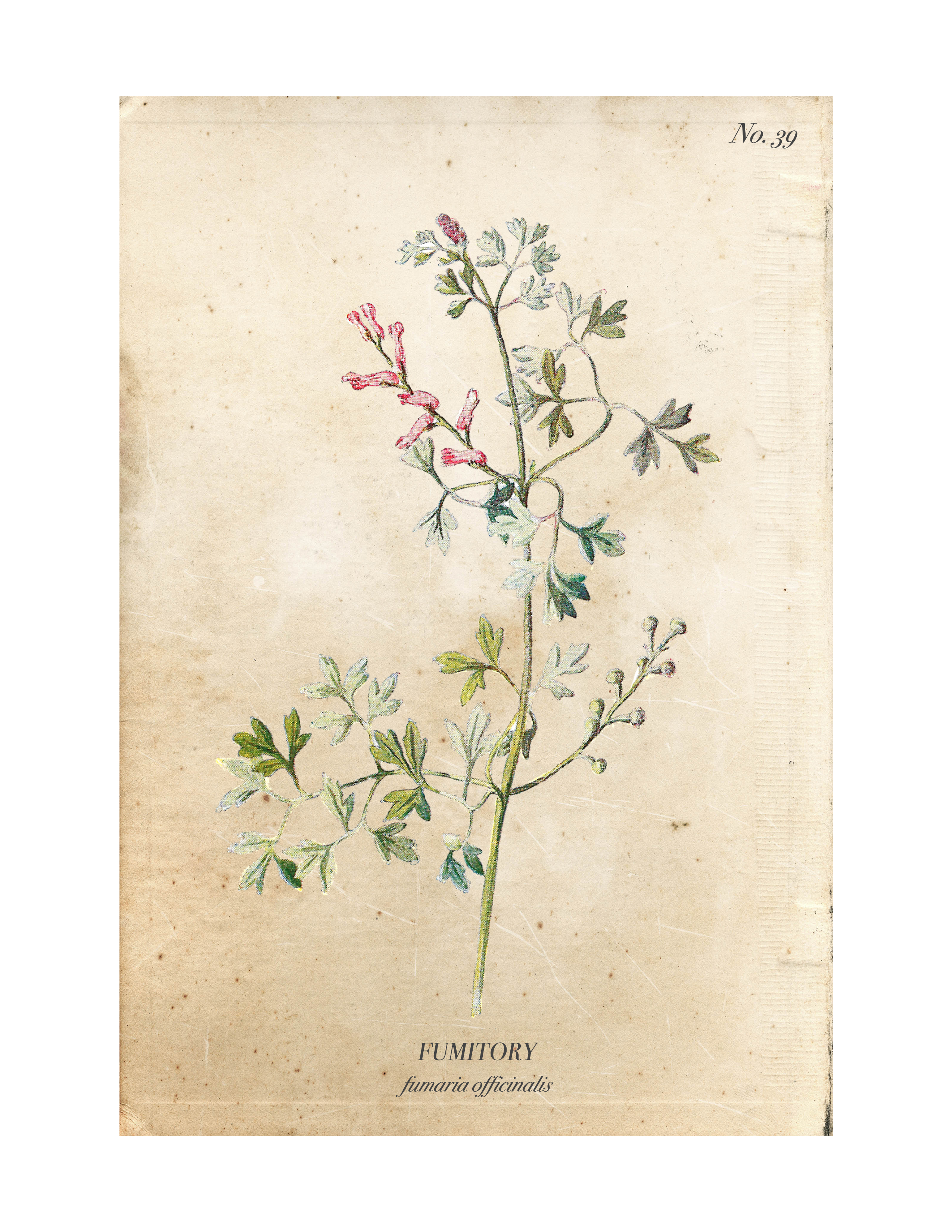 Free flower images to print banner royalty free download Free Vintage Botanical Printables banner royalty free download