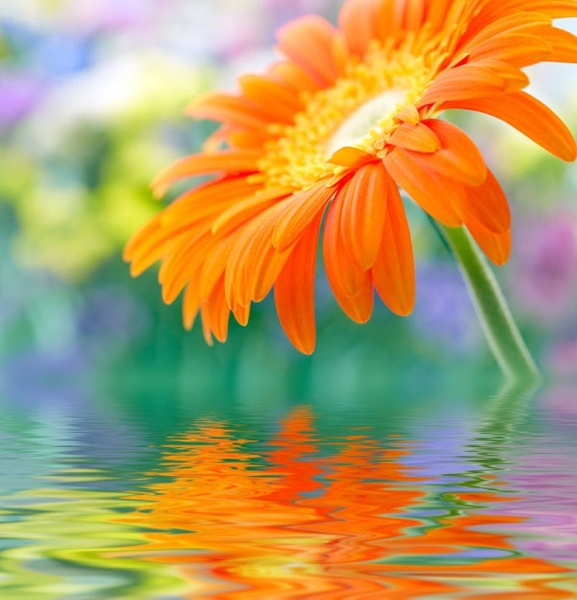 Free flower jpg clip freeuse stock Hd flower pictures free stock photos download (13,069 Free stock ... clip freeuse stock