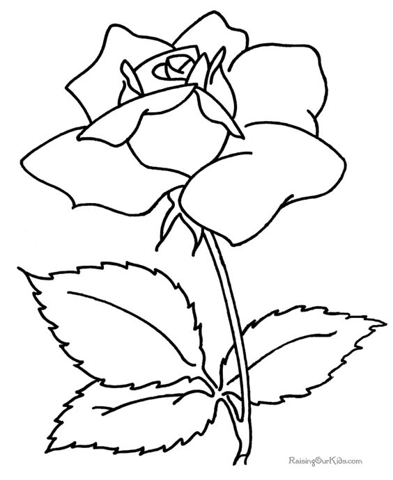 Free flower jpg vector transparent 17 Best images about Flowers 3 Jpg | Coloring, Stencils and ... vector transparent
