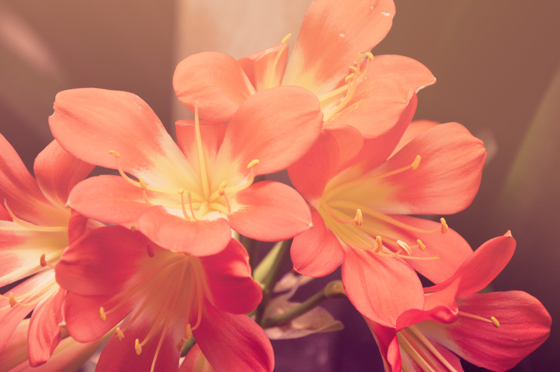 Free flower jpg png royalty free Garden flowers · Free Stock Photo png royalty free