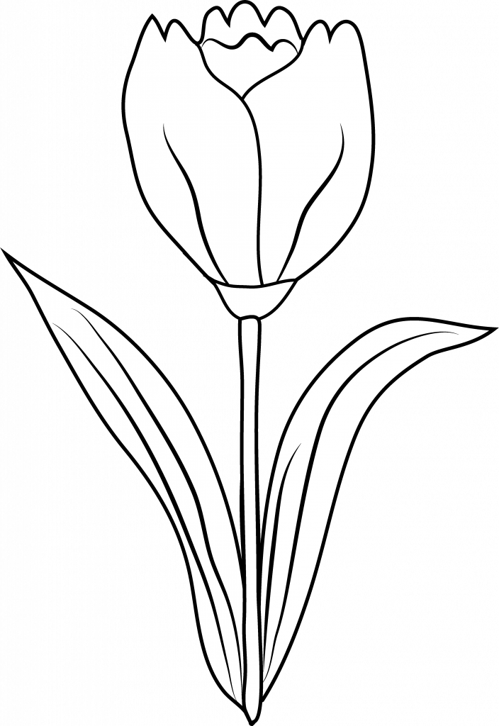 Free flower outline clipart clipart royalty free library Genuine Tulip Flower Outline Clipart Panda Free Images #12844 | 3dnerja clipart royalty free library