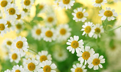 Free flower prints to download png transparent download Pressed Flower Delights: Flower Wallpapers Download png transparent download