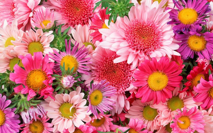 Free flower prints to download vector royalty free Pictures Beautiful Flowers Hd Desktop Backgrounds With Flower ... vector royalty free