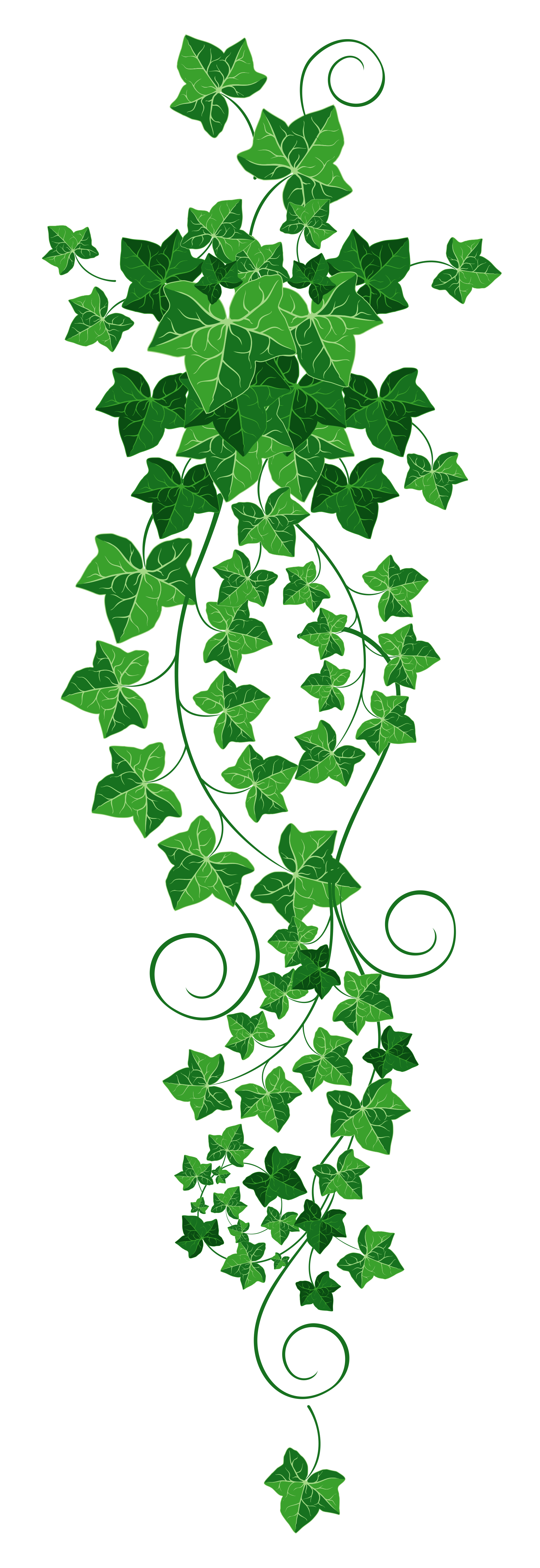 Free pumpkin vine png clipart banner library Vine Ivy PNG Clipart Picture | Gallery Yopriceville - High-Quality ... banner library