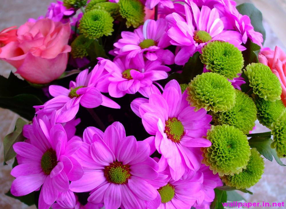 Free flowers images download