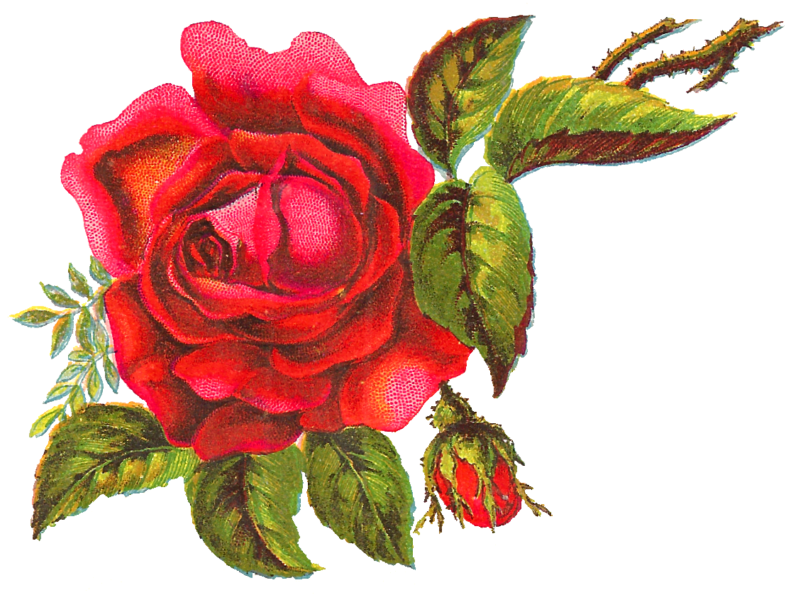 Free flowers pictures download graphic transparent stock Stunningly beautiful, free digital red rose clip art perfect for ... graphic transparent stock