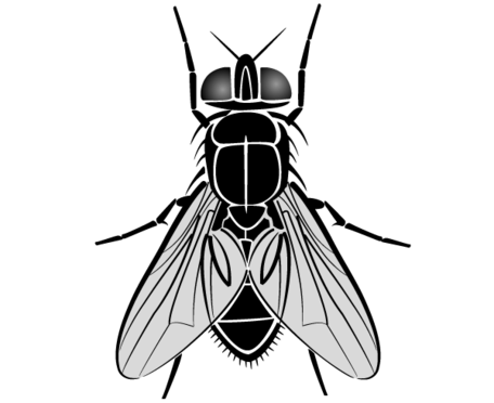 Free fly clipart jpg black and white stock Free Fly Clipart and Vector Graphics - Clipart.me jpg black and white stock