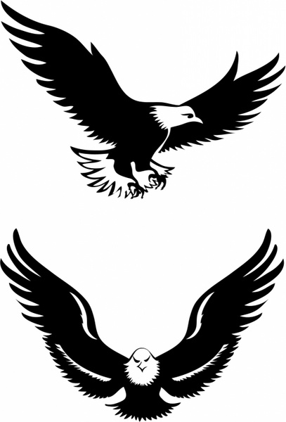 Eagles vector in adobe. Free flying eagle clipart