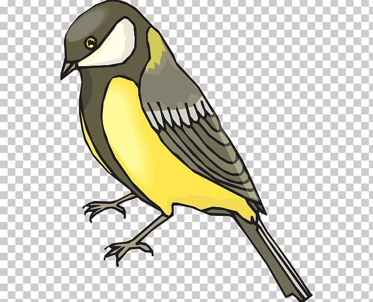 Free flying goldfinch bird clipart vector transparent stock Bird European Goldfinch Penguin PNG, Clipart, American Goldfinch ... vector transparent stock