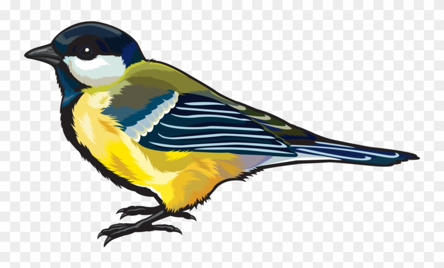 Free flying goldfinch bird clipart clipart Finch Png Hd - Bird Png Clipart Transparent Png (#2177522) - PinClipart clipart