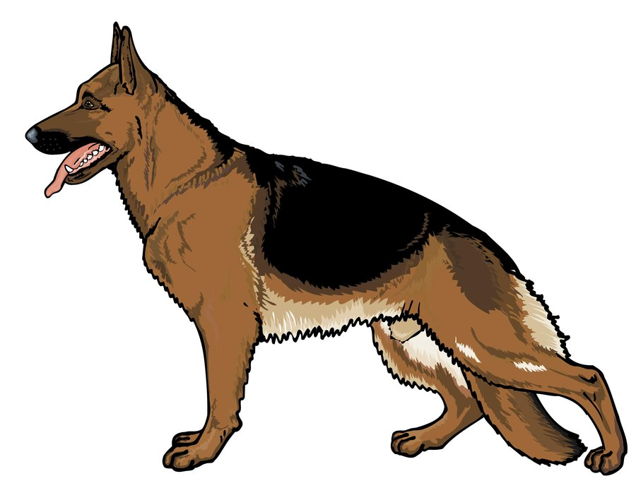German shepherd clipart graphics picture free stock 90+ German Shepherd Clip Art | ClipartLook picture free stock