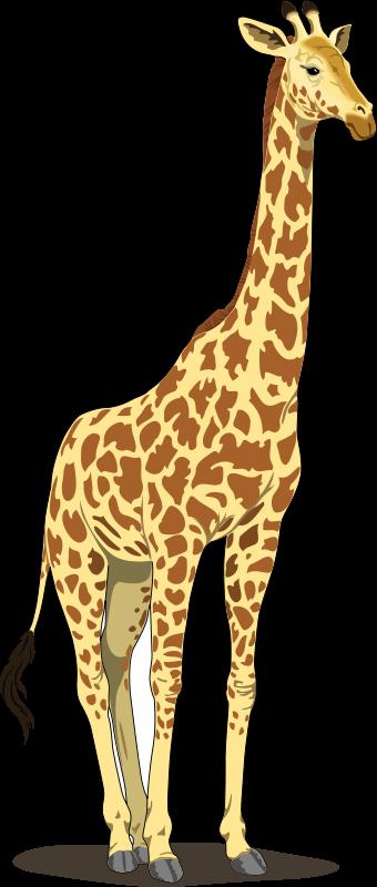 Free giraffe clipart. Clip art royalty animal