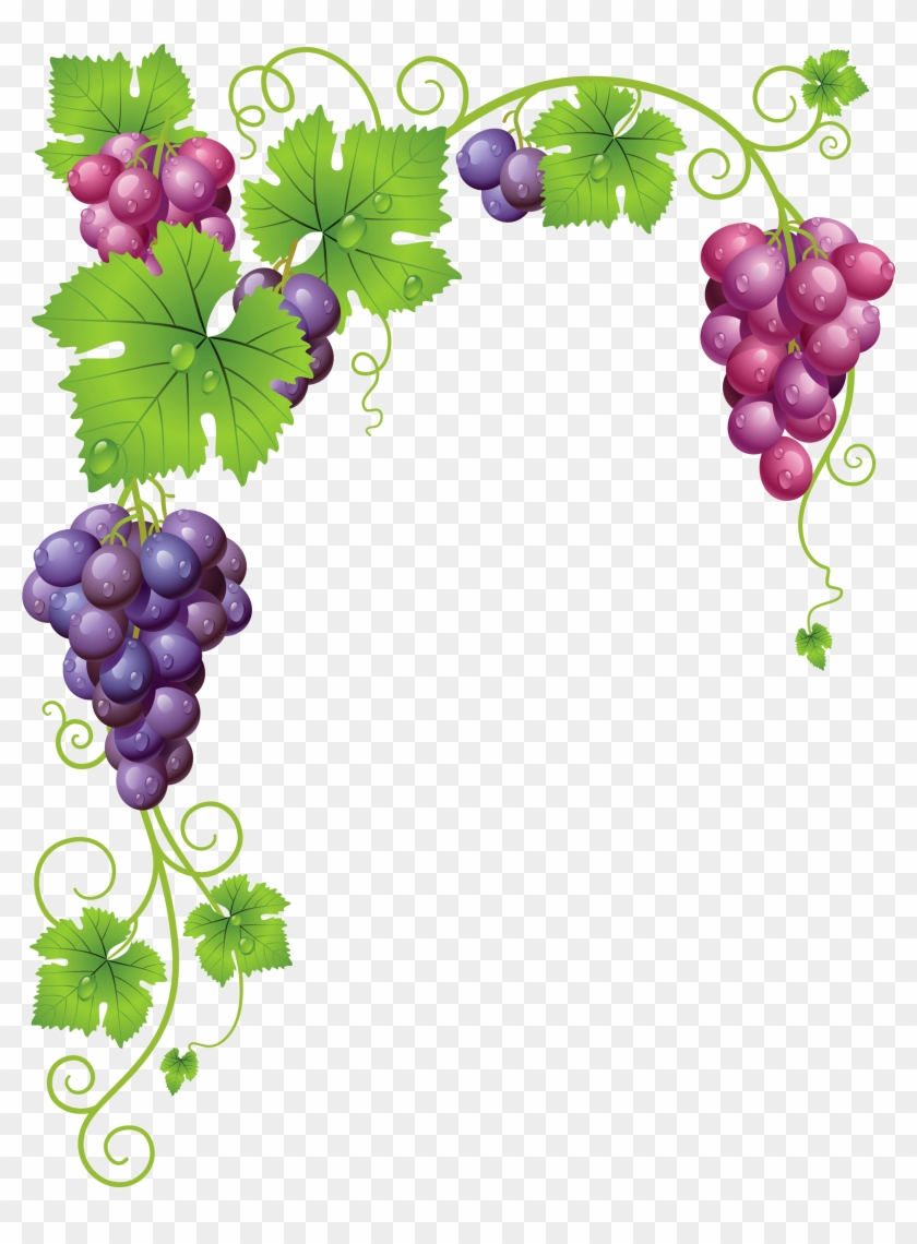 Free grapevine clipart borders image download Graphic Grape Vine Clipart Free - Grape Vine Border Png, Transparent ... image download