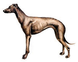 Clipart greyhound png freeuse download Free Free Cliparts Greyhound, Download Free Clip Art, Free Clip Art ... png freeuse download