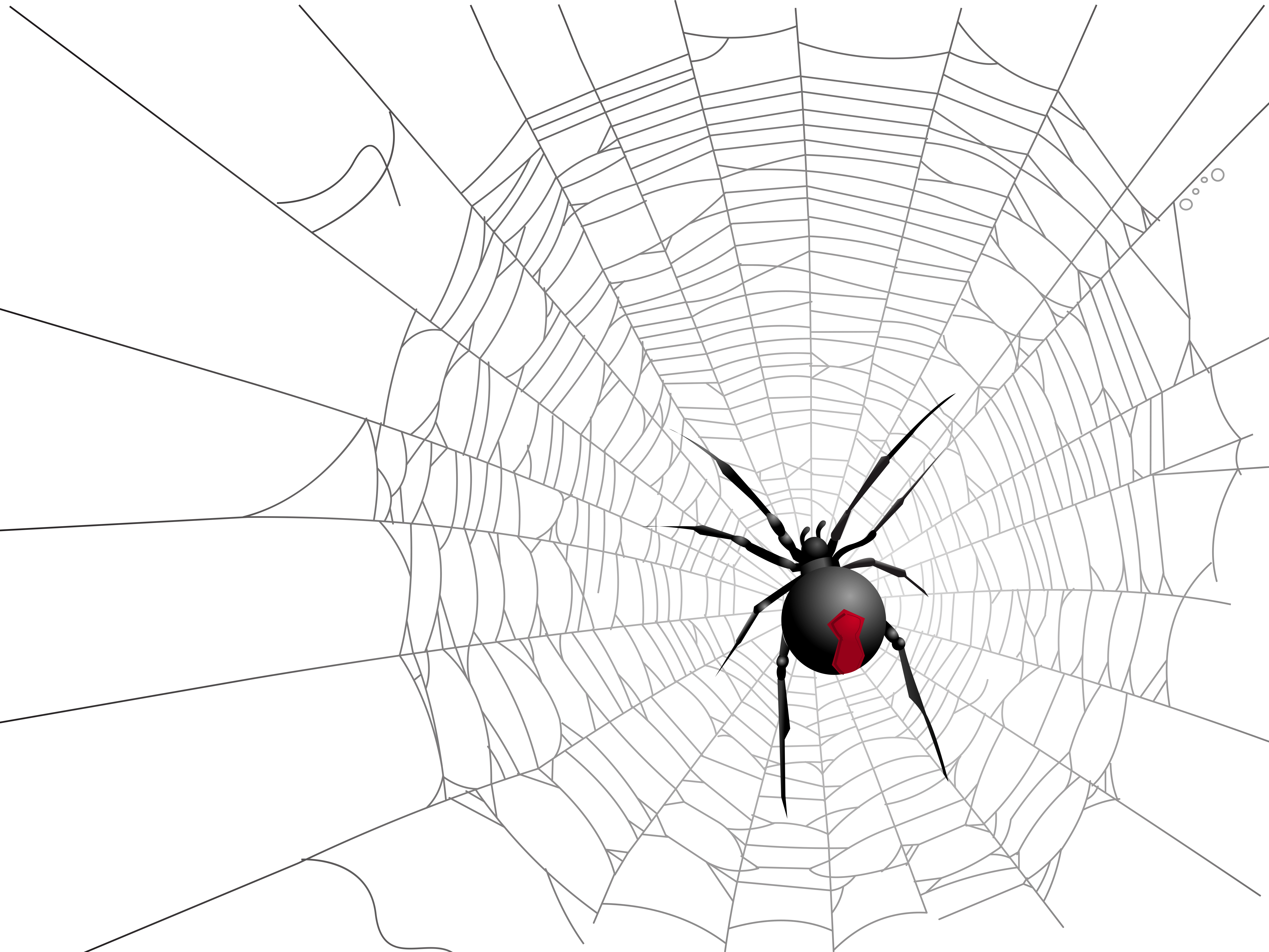 Free halloween spider web clipart svg library Halloween Transparent Net and Spider Picture | Gallery Yopriceville ... svg library