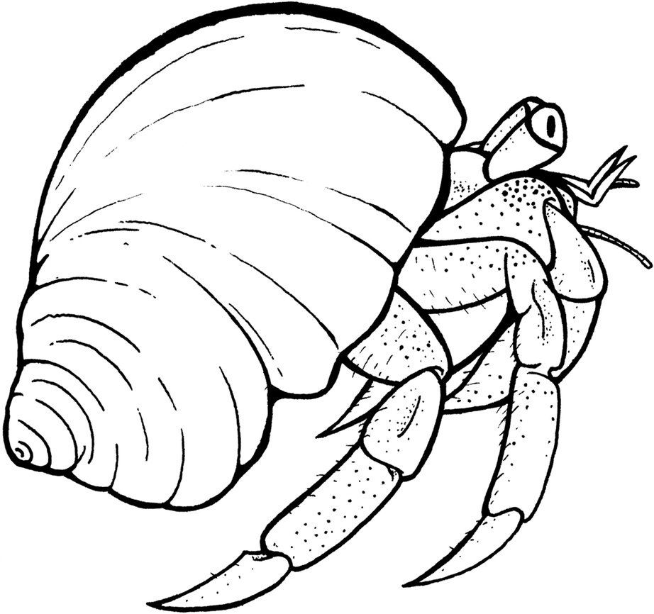 Free hermit crab clipart clip royalty free library Free Printable Hermit Crab Coloring Pages For Kids | Ma kai | Hermit ... clip royalty free library
