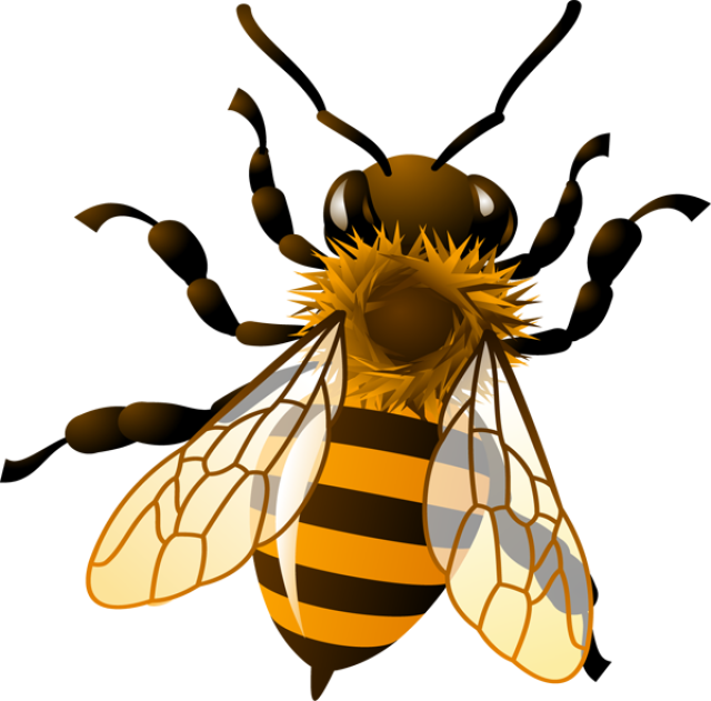Free honey bee clipart images. Animal cliparts