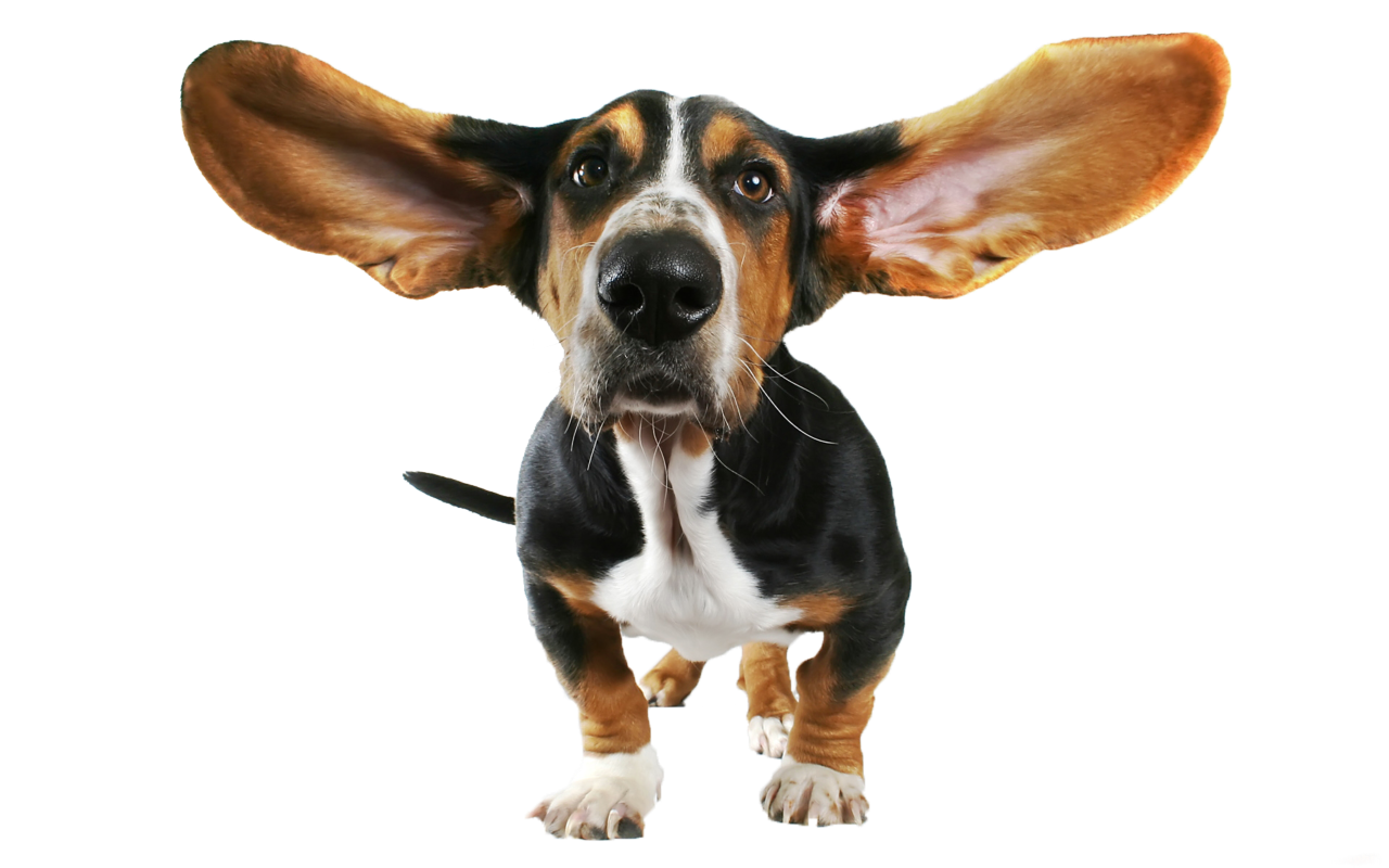 Free hound dog clipart picture transparent library Basset Hound Beagle Bloodhound Papillon dog Chihuahua - Funny Dog ... picture transparent library
