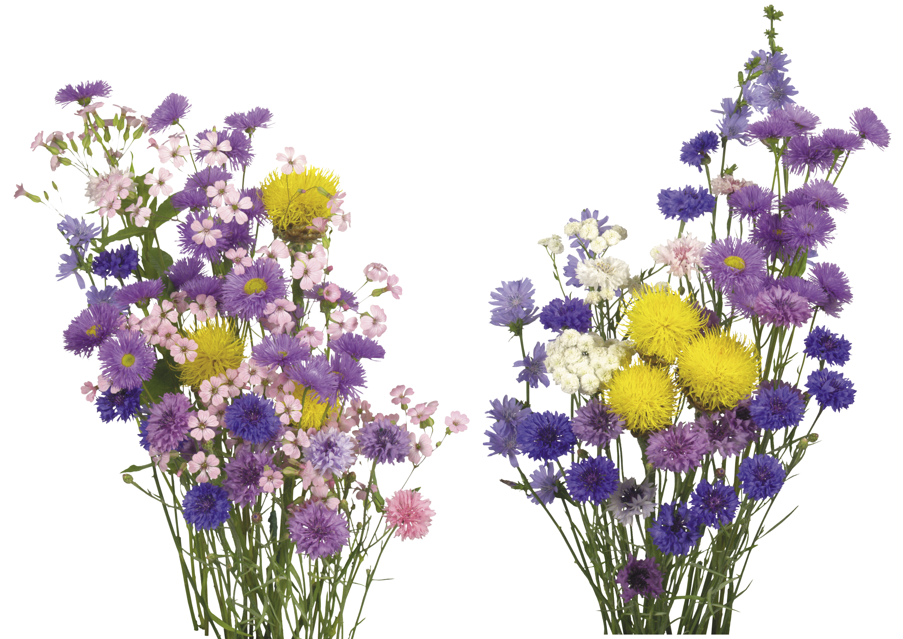 Free image flowers png freeuse download Free flower photo overlay, free overlays, Photoshop overlays from ... png freeuse download