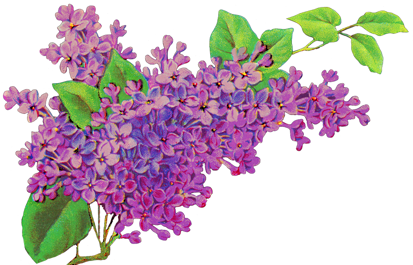Violet flower clipart picture stock Free Flower Clipart picture stock