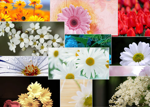 Free images flowers download banner stock Flower Wallpapers, Flower Images, Flowers Picture, Flower Pics ... banner stock