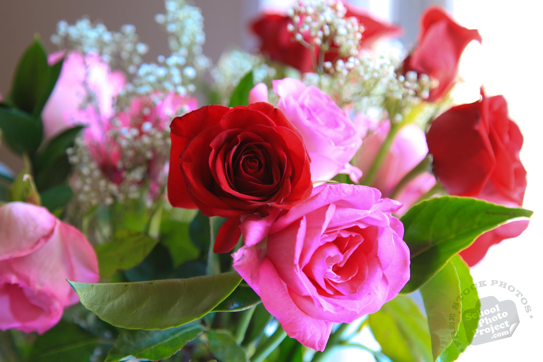 Free images of valentine flowers image transparent stock Fresh Roses, FREE Stock Photo, Image, Picture: Valentine's Day Red ... image transparent stock