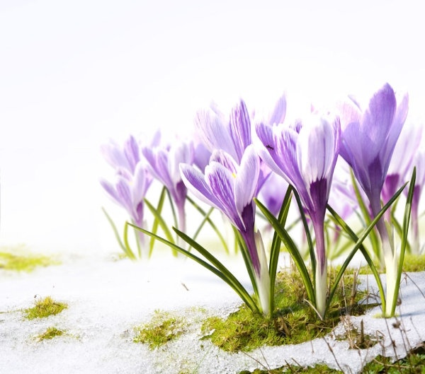 Free images spring flowers freeuse Spring flowers background free stock photos download (20,488 Free ... freeuse