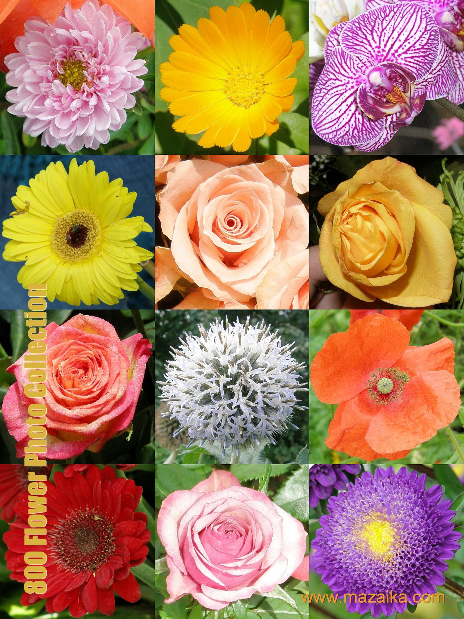 Free jpeg images of flowers clip art library Free jpeg images of flowers - ClipartFest clip art library