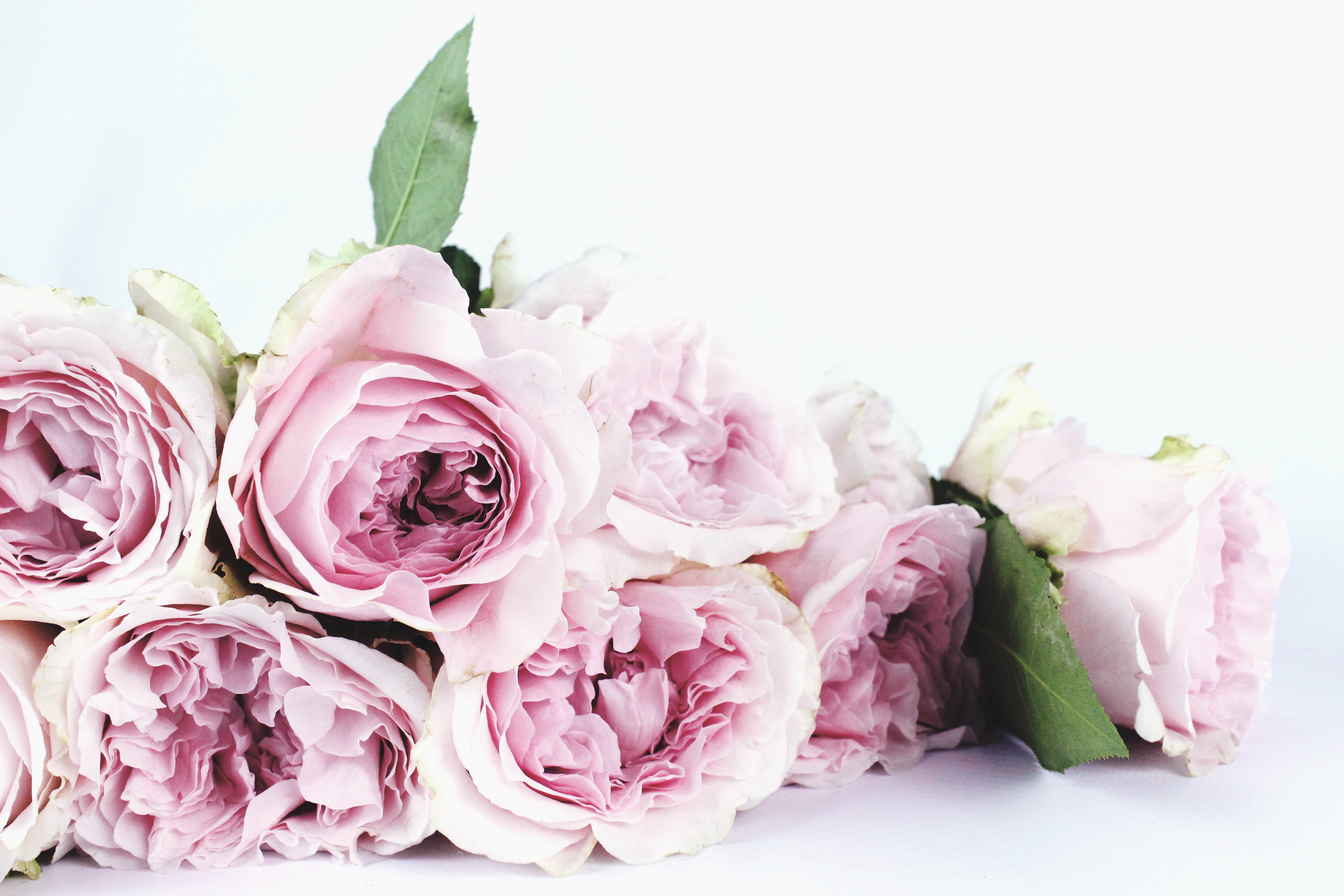 Free jpeg images of flowers picture download Flower images · Pexels · Free Stock Photos picture download