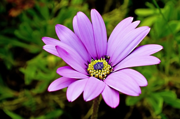 Free jpeg images of flowers picture freeuse stock Free jpeg images of flowers - ClipartFest picture freeuse stock