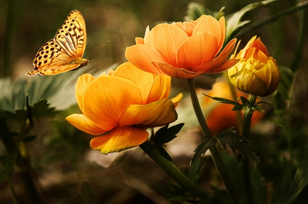 Free jpeg images of flowers vector library library Flowers background butterflies Free stock photos in JPEG (.jpg ... vector library library